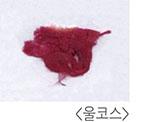 waste-wool.jpg